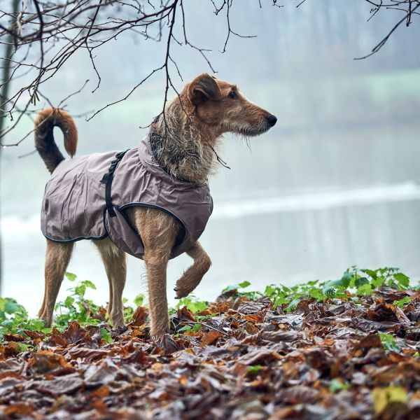 Hundemantel Uppsala