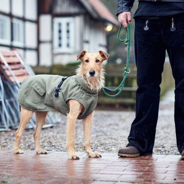Hundemantel Uppsala Trend