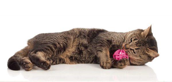 Katzenspielzeug Catnip Ball