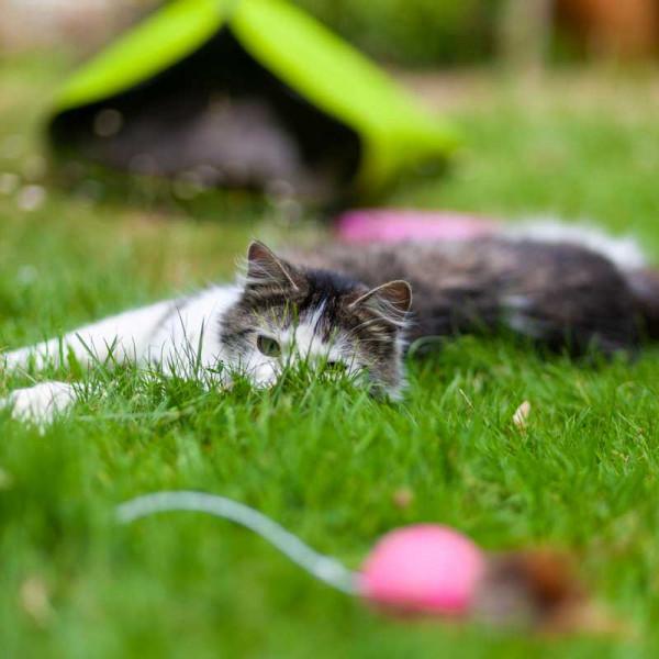 Katze_Garten