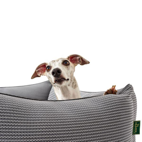 Hundesofa Toronto