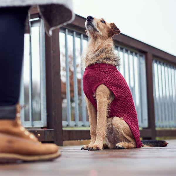Hundepullover Malmö
