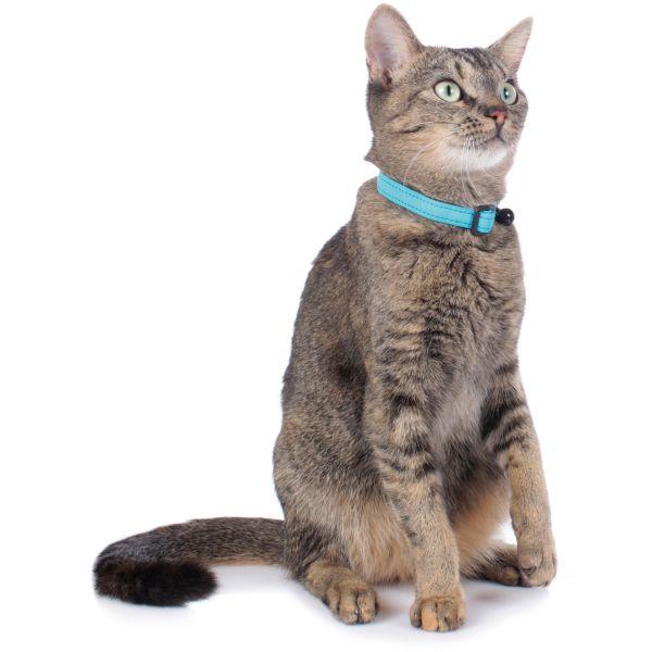 Katzenhalsband Softie