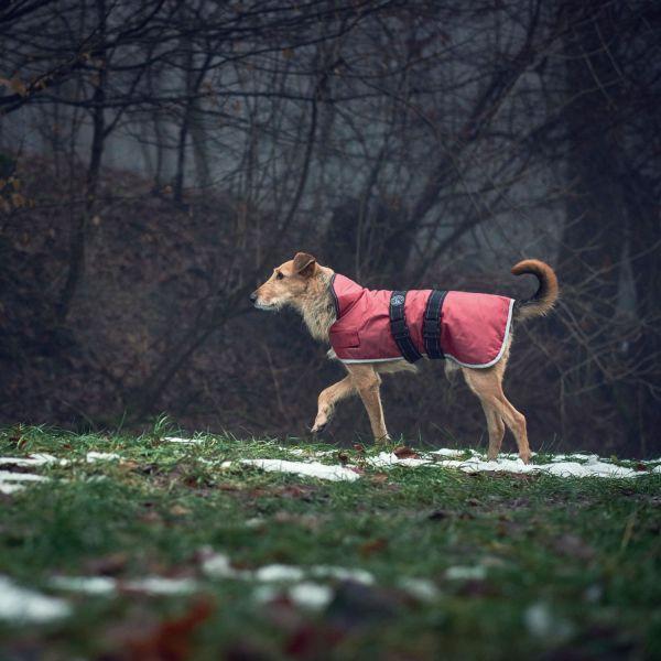 Hundemantel Denali Reflect