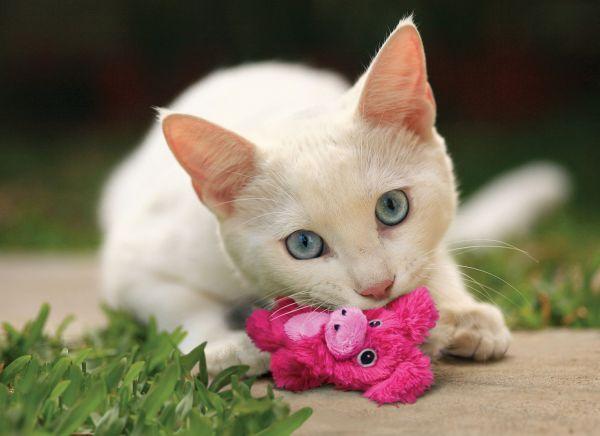 Katzenspielzeug Kong Catnip Botanicals Reffillable