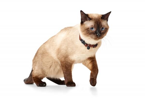 Katzenhalsband Cody