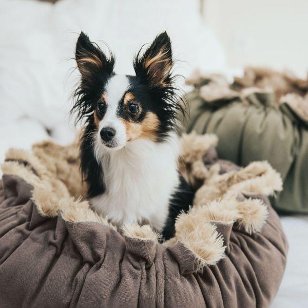 Hundebett Tilburg