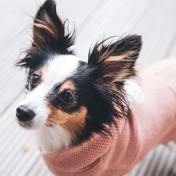 Dog pullover Rögla
