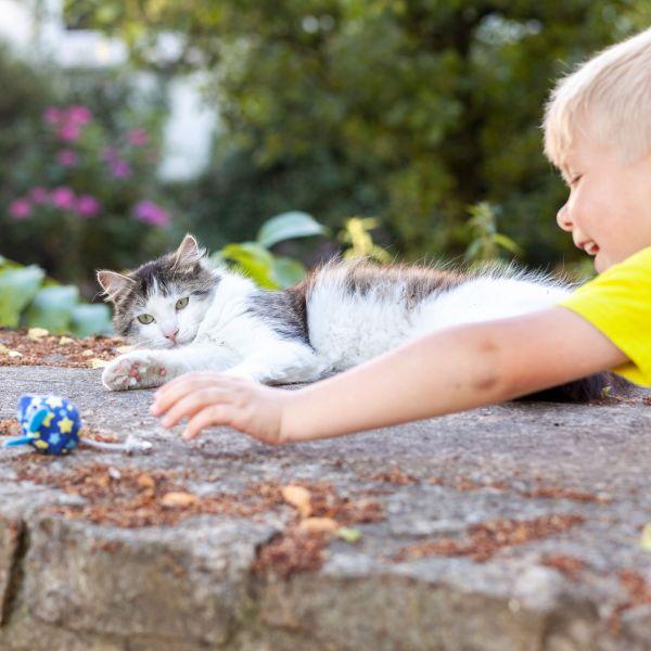 Cat toy Kerikeri