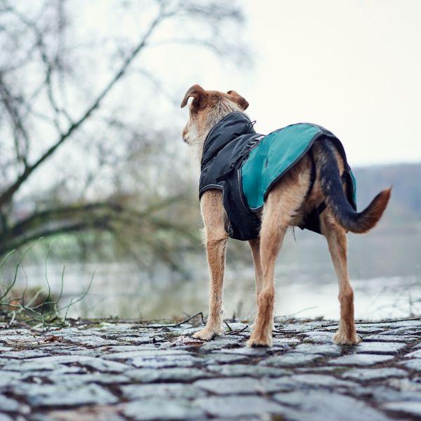 Hundemantel Uppsala Allrounder