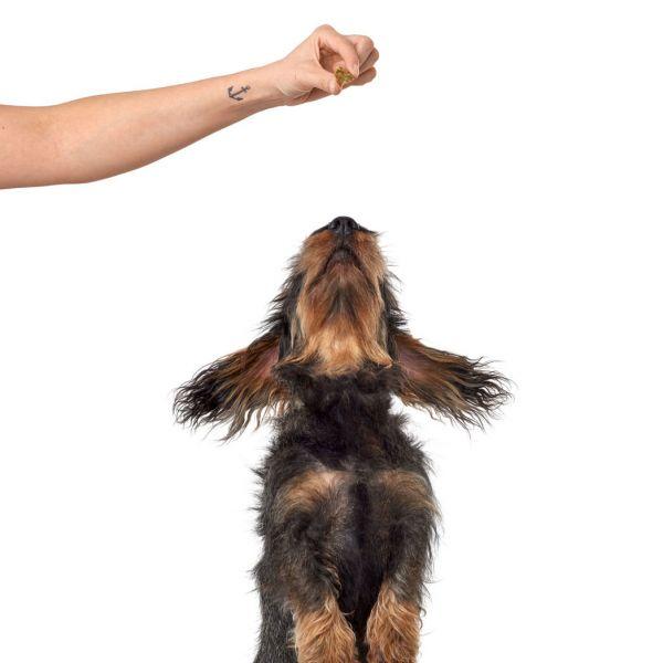 Hundesnack Lifestyle