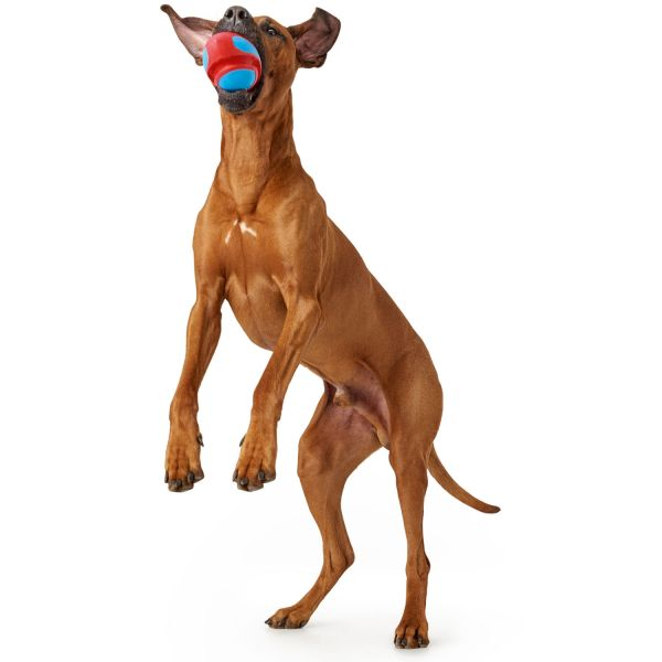 Hundespielzeug Yuroma