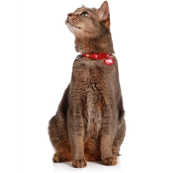 Cat collar Krokom