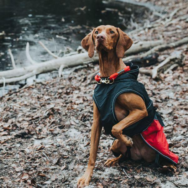 Dog coat Uppsala Allrounder