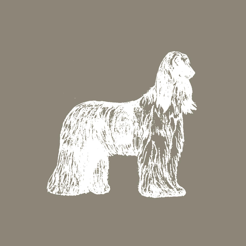 Bild_Afghanischer Windhund