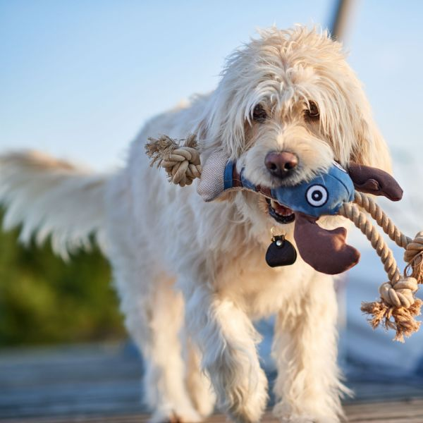Dog toy Canvas Sansibar Rantum
