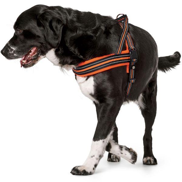 Norwegian harness Meldal